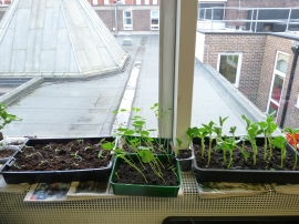 seedlings a plenty !!